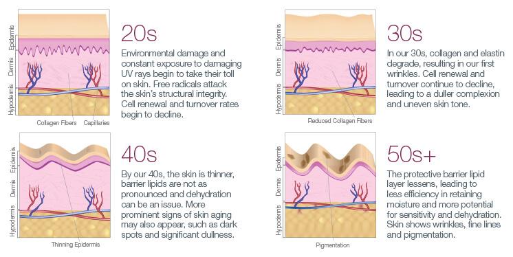 Skin Aging Process